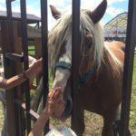 Конь на дне поля